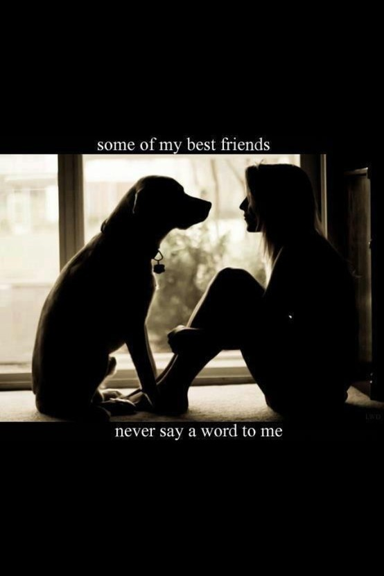 21+ Funny Labrador Dog Quotes And Sayings – Page 6 – The Paws