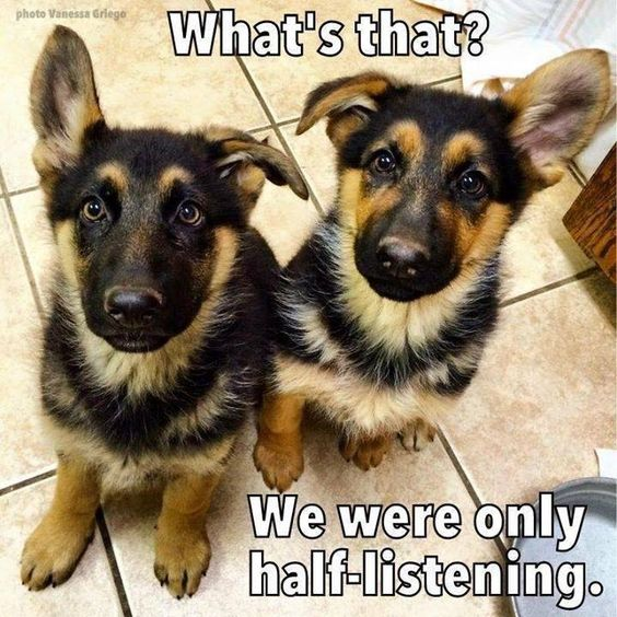 55+ Funny Memes Of German Shepherds That Will Make You ...