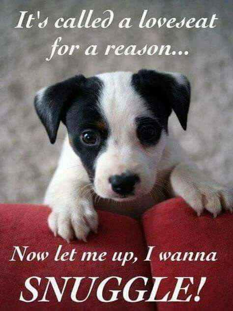 12+ Cute Jack Russell Terrier Dog Quotes And Sayings   The Paws
