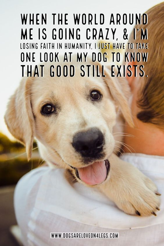 21+ Funny Labrador Dog Quotes And Sayings – Page 4 – The Paws