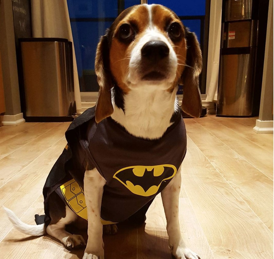 15 Beagle Halloween Costume Ideas Page 7 Of 7 The Paws
