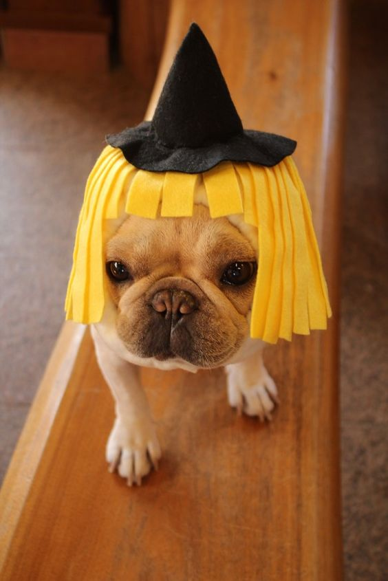 The 25+ French Bulldog Halloween Costumes So Cute You'll ...