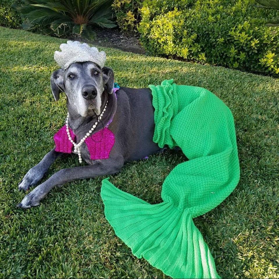 60 Costumes That Prove Great Danes