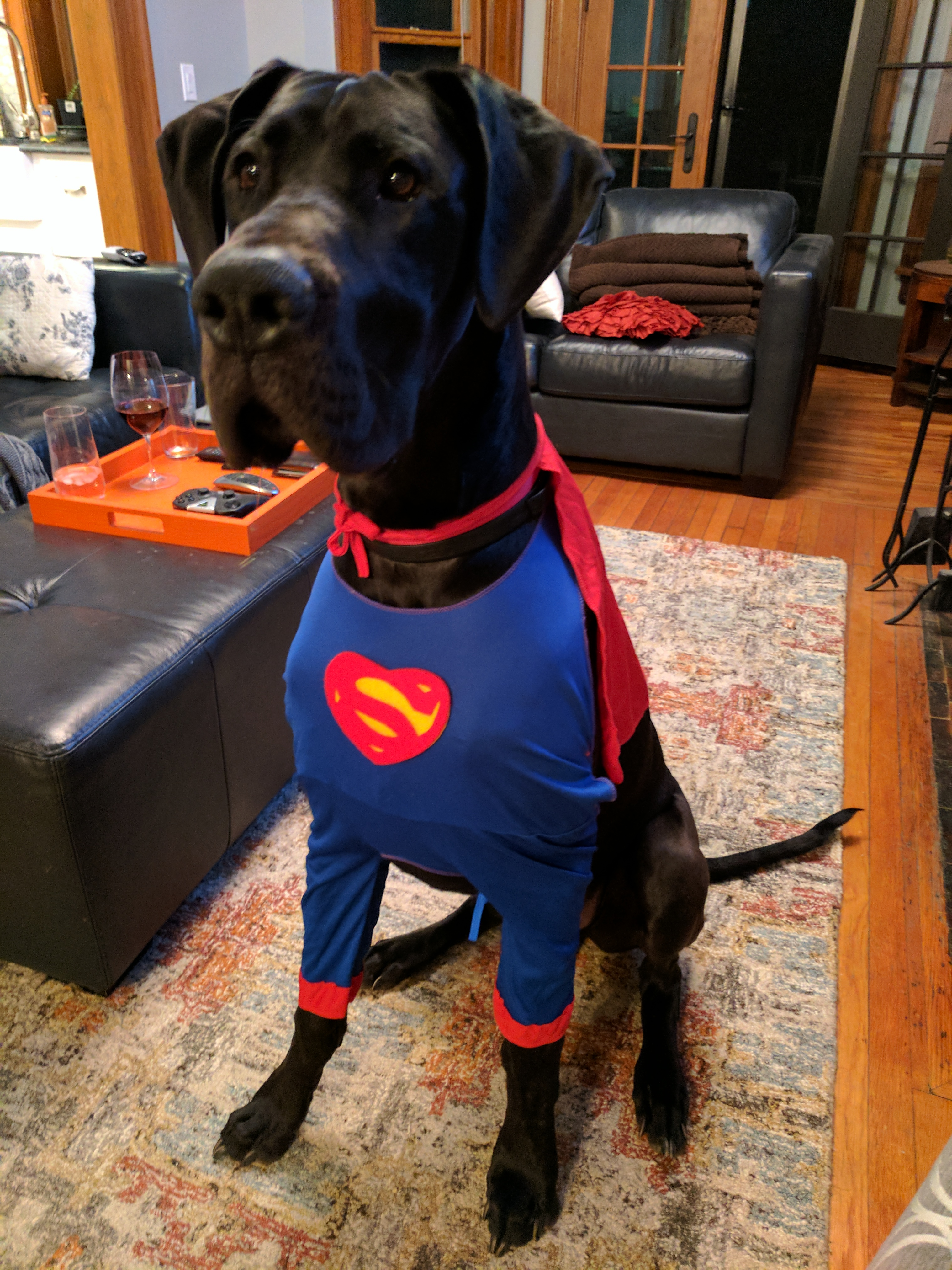 Costumes For Great Danes