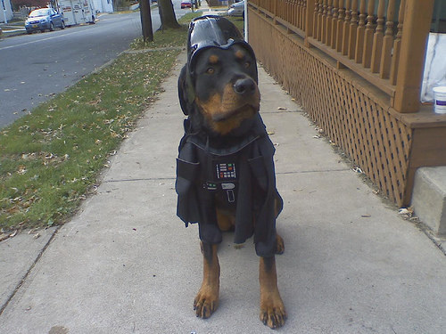 20+ Hilarious Rottweiler Dogs in Halloween Costumes