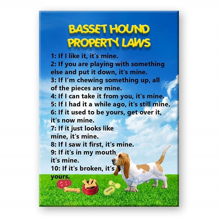 Basset Hound Property Laws Fridge Magnet