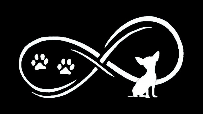Chihuahua Dog Infinity Decal Sticker