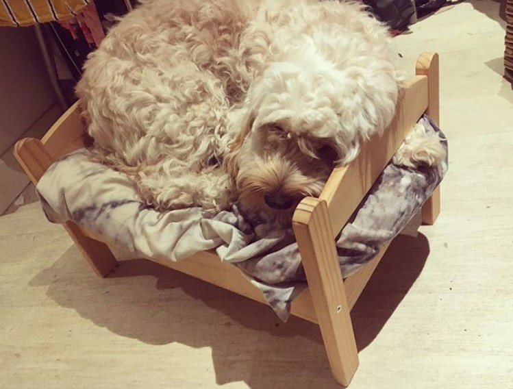 Raised small dog bed