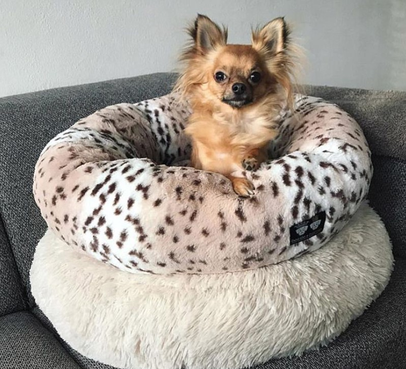 Raised dog bed, Small dog bed, Dog pillow