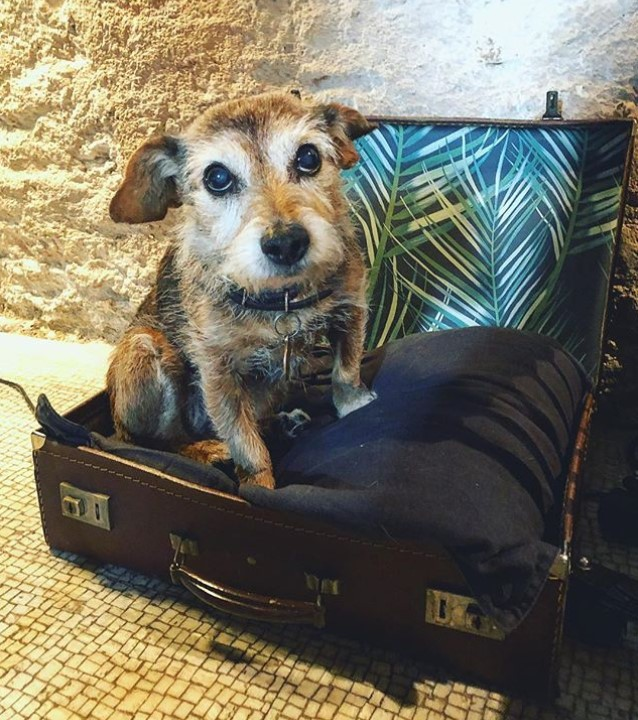 DIY dog bed made of a suitcase