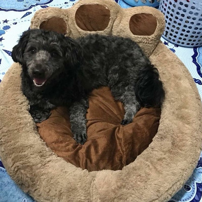 Dog pillow, paw dog bed