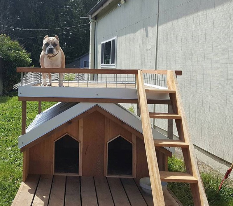 Dog house with stairs, Dog house with balcony