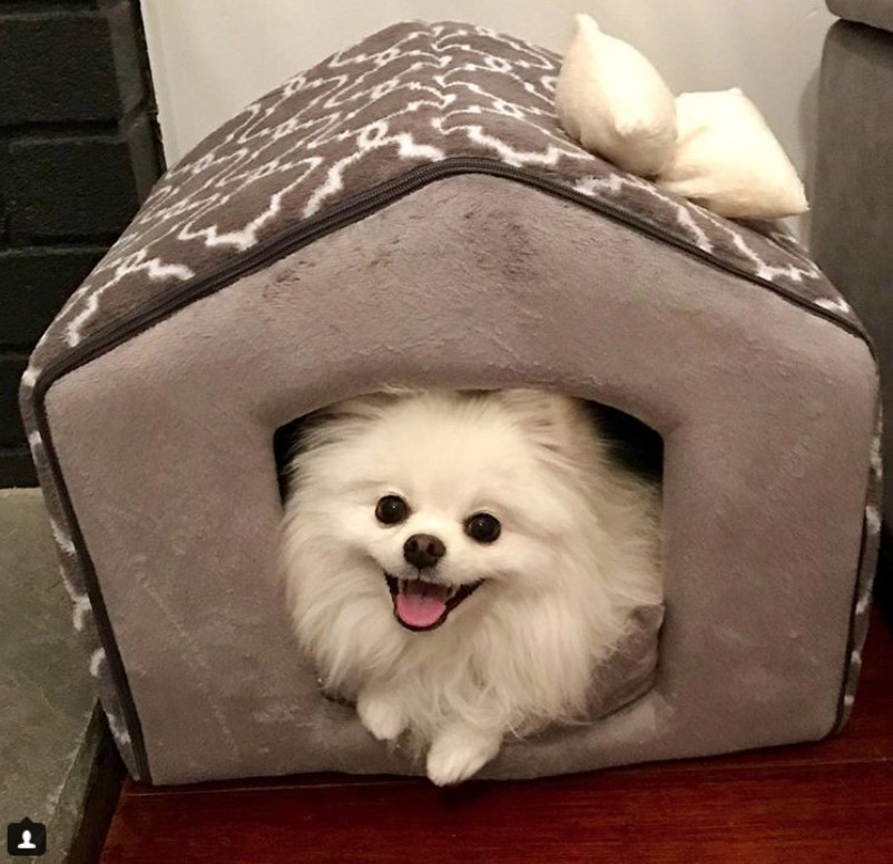 Indoor dog house for small dogs
