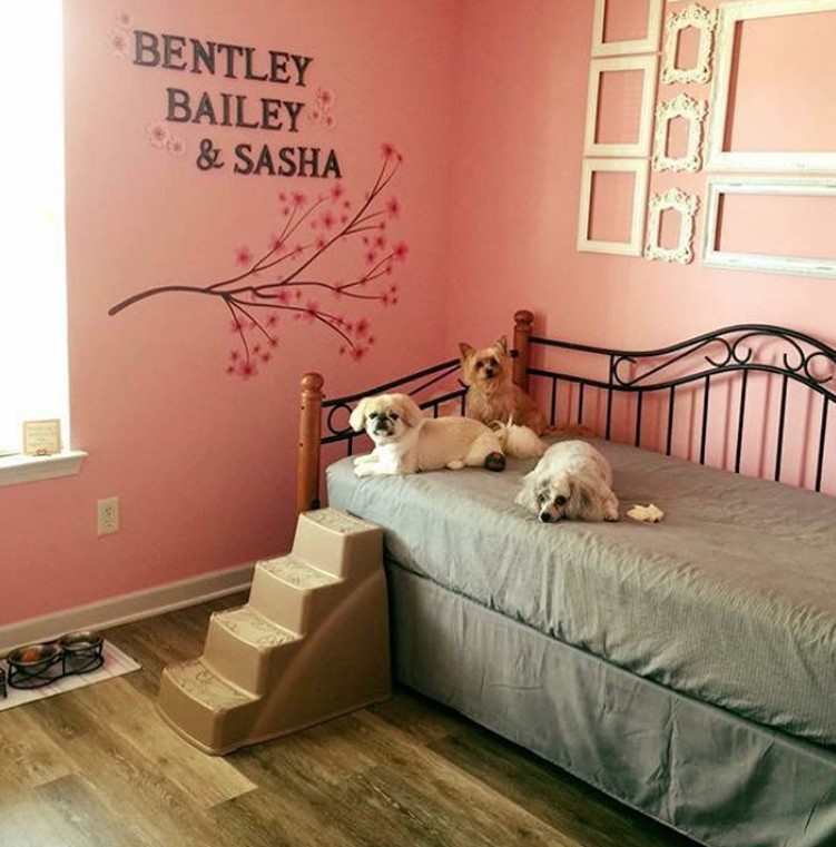 38 Best Dog Room Decorating Ideas Page 7 The Paws