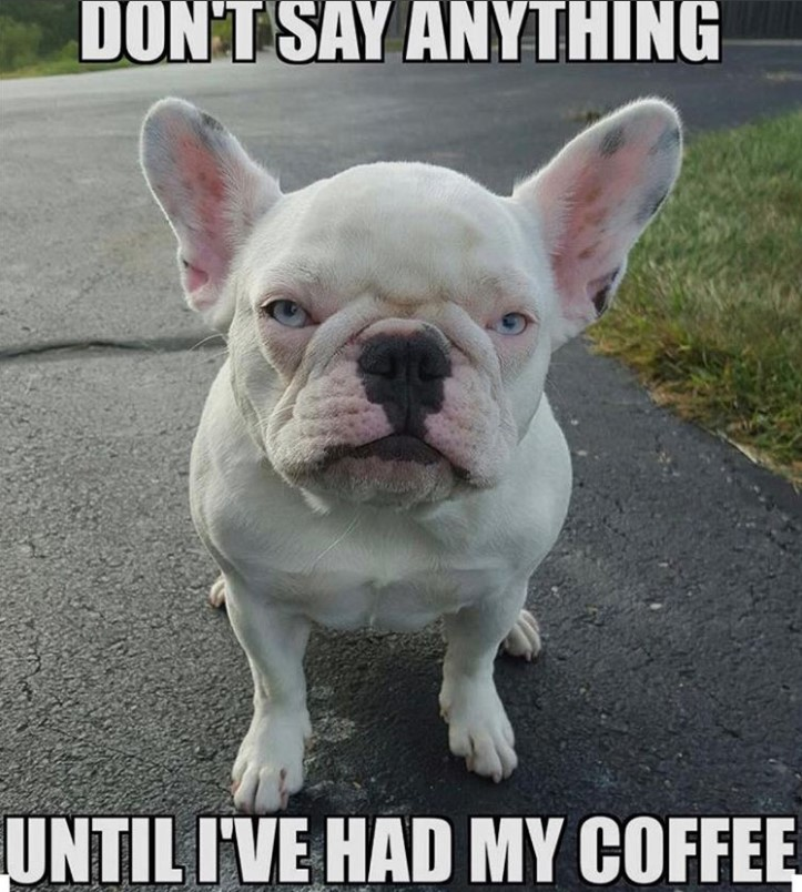 45 Best French Bulldog Memes Of All Time The Paws