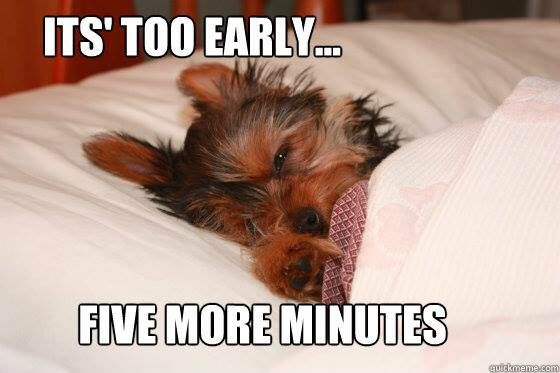20 Best Yorkie Memes Of All Time Page 4 Of 9 The Paws