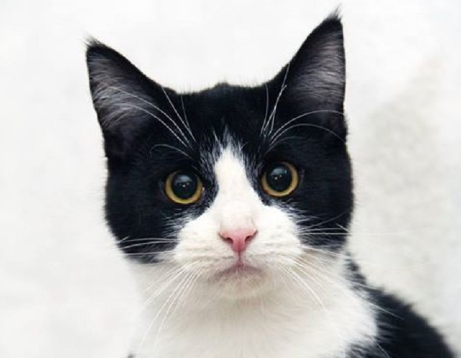 60 Black And White Female Cat Names The Paws