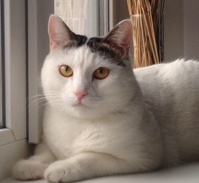 100+ Greek Mythology Cat Names | The Paws