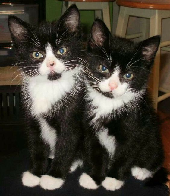 150 Best Black And White Cat Names The Paws