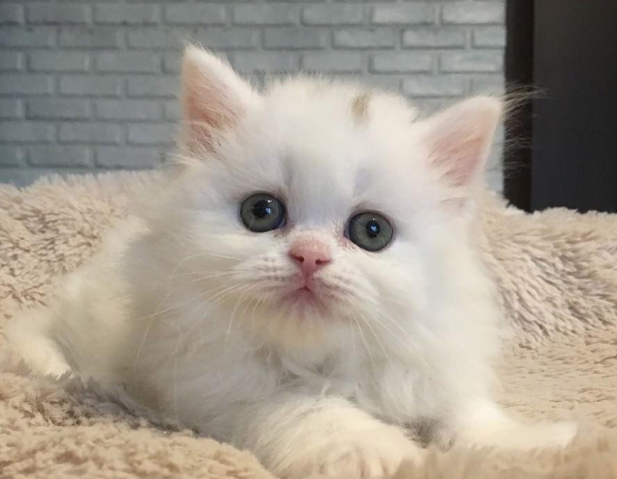 300 Elegant Cat Names | The Paws