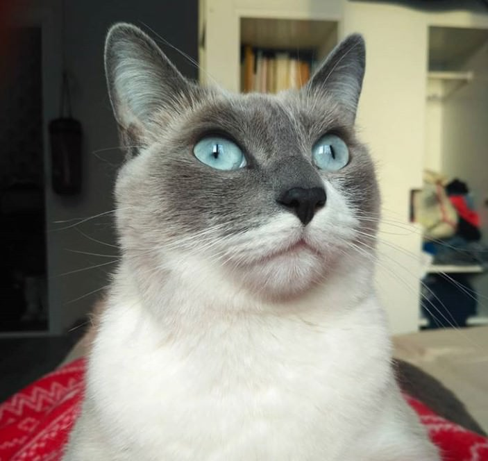 50 Funny Female Cat Names | The Paws