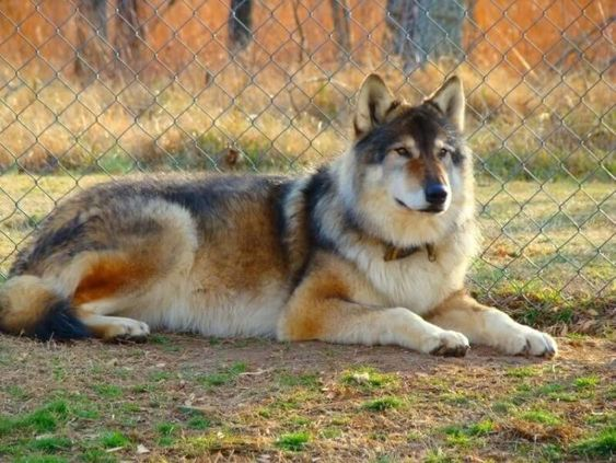 70 Indian Names for Female Dogs | The Paws