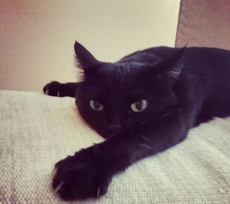 75 Funny Names For Black Cats The Paws