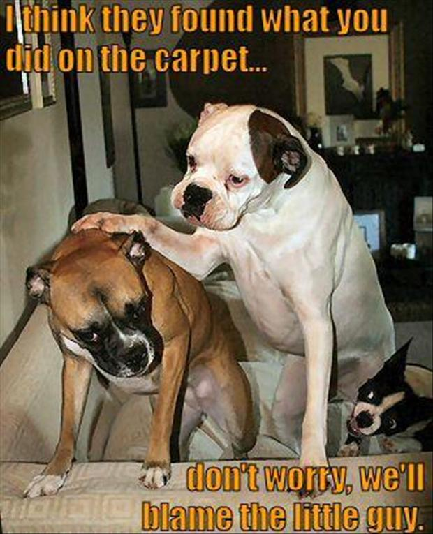 21 Of The Best Boxer Dog Memes Page 2 Of 5 The Paws
