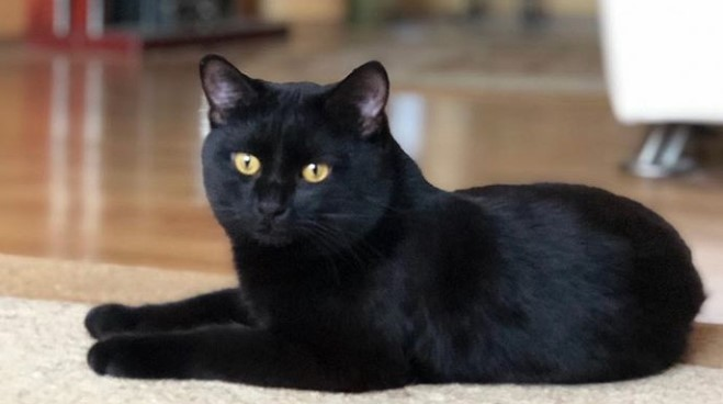 80 Creepy Cat Names - Best Halloween Cat Names | The Paws