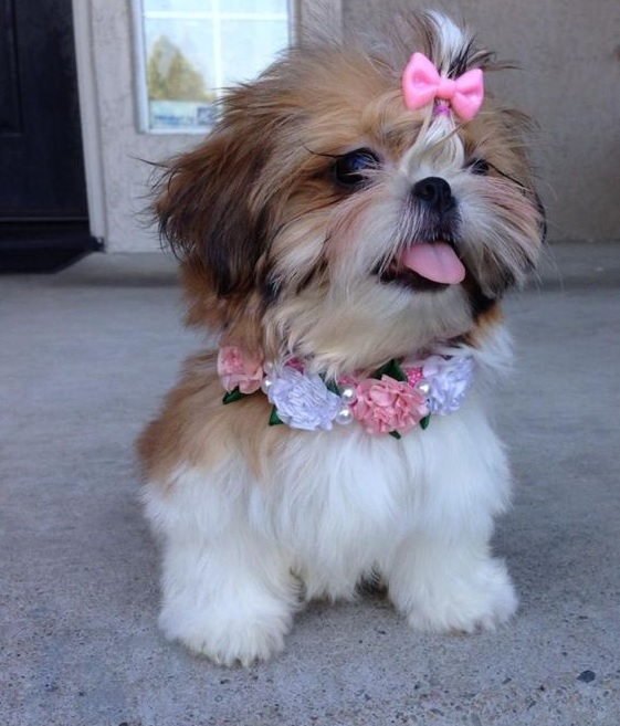 100 Unique Names for Small Dogs – The Paws  Unusual Little Dogs