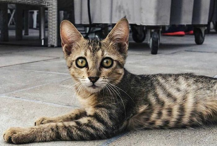 200 Striped Cat Names The Paws