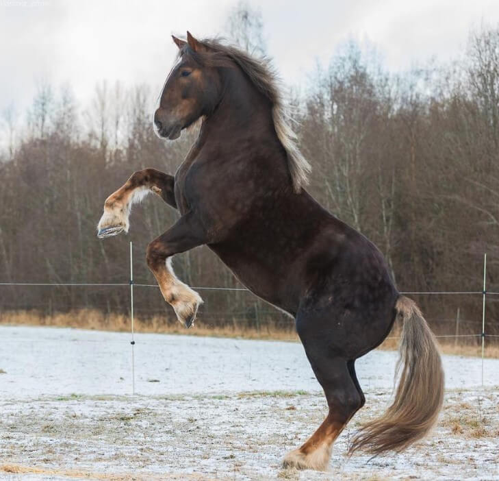 100 Big Strong Horse Names The Paws