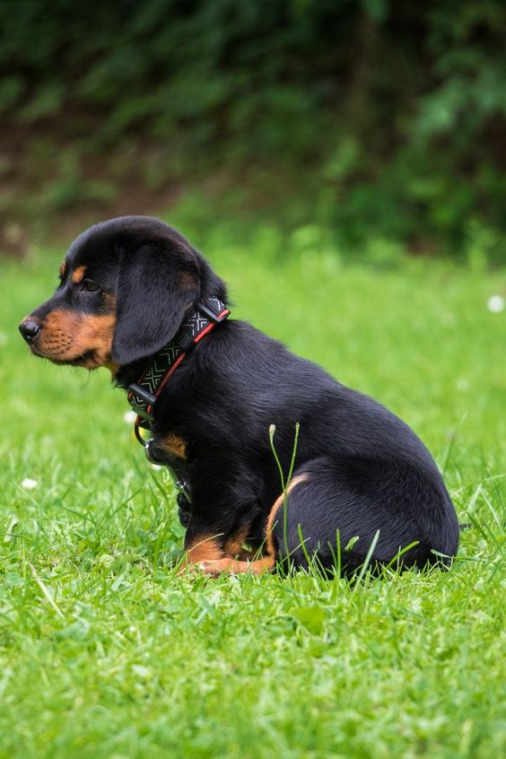 80 Black and Brown Dog Names – The Paws