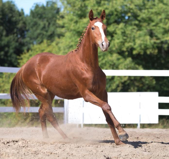 cool horse names - 696×655