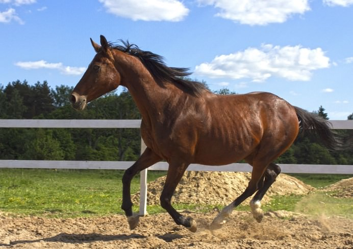 cool horse names - 692×490
