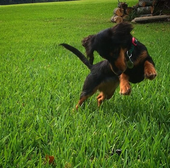 75 Hunting Dog Names For Male Dogs