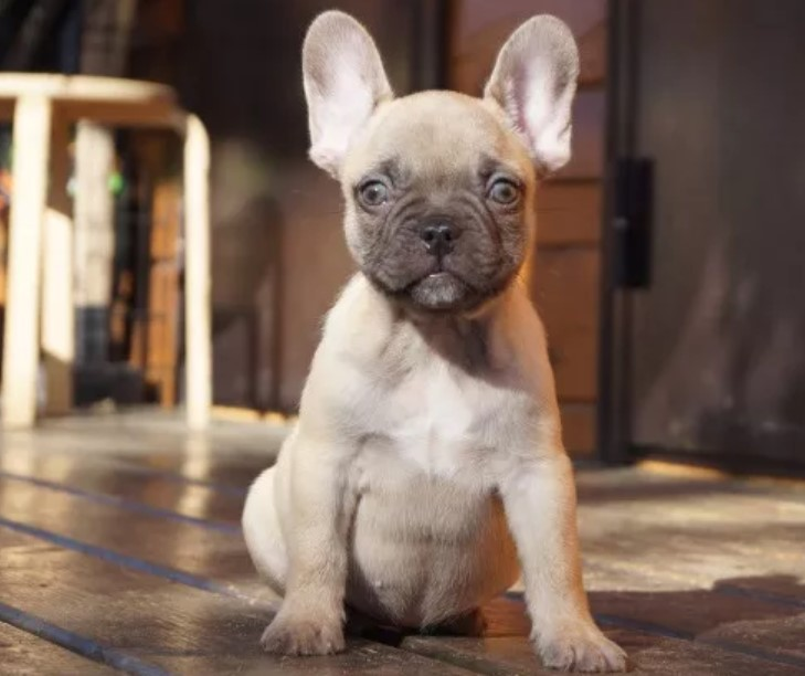 200 One Syllable Dog Names | The Paws