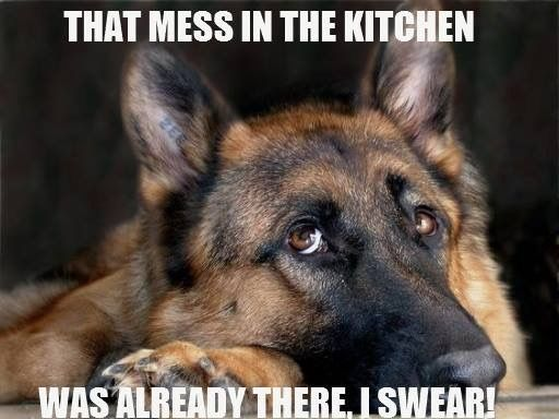 22 German Shepherd Memes That Will Make You Cry Laughing Page 5