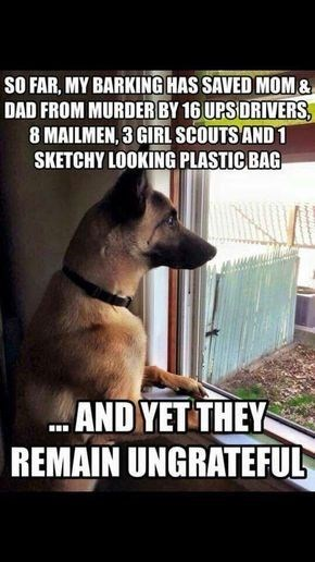 22 German Shepherd Memes That Will Make You Cry Laughing The Paws