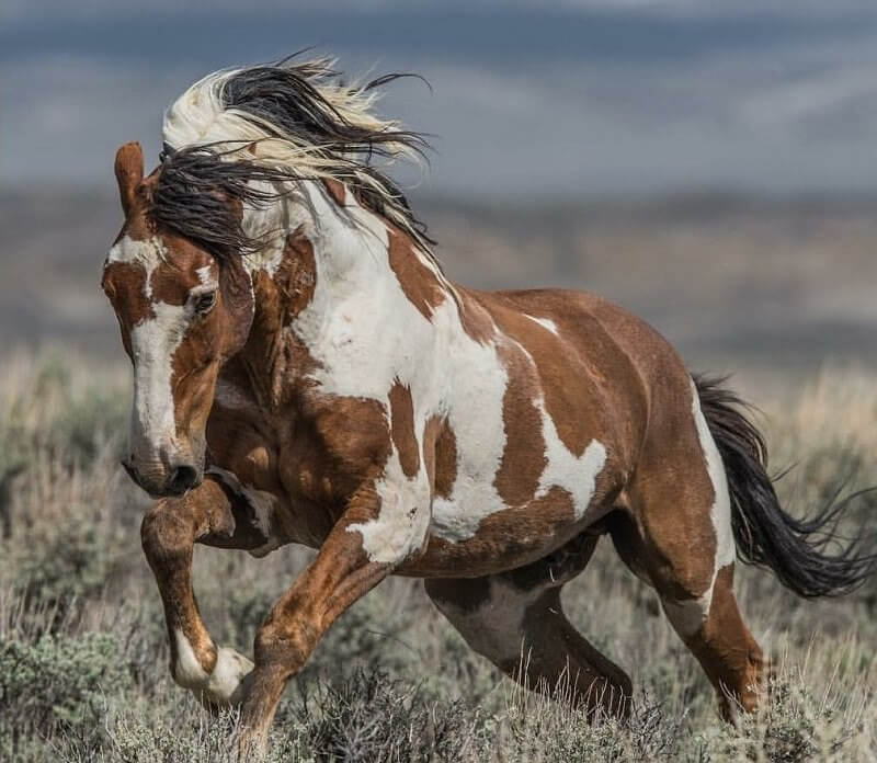 400 Native American Indian Horse Names | The Paws