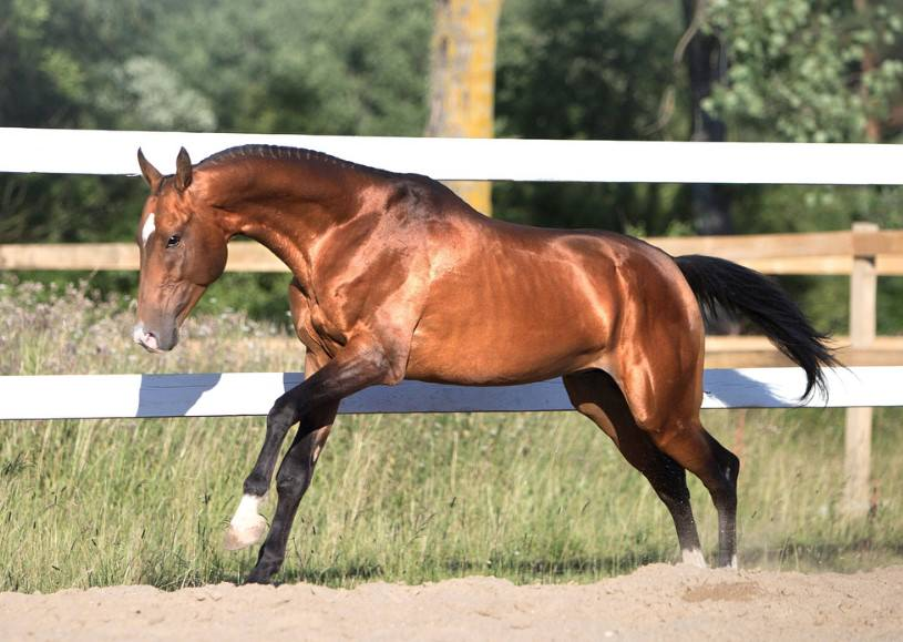 cool horse names - 815×579