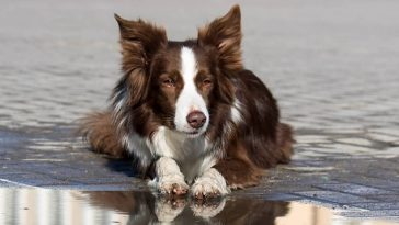101 Funny Dog Names for Female Dogs   The Paws