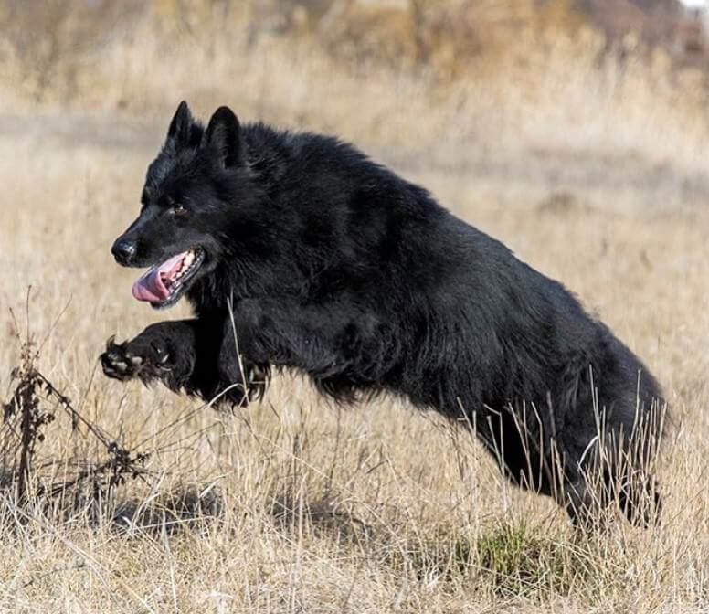 70 Funny Black Dog Names | The Paws
