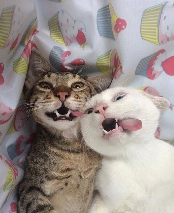 70 Funny Cat Jokes That Will Get You A Laugh Every Time The Paws