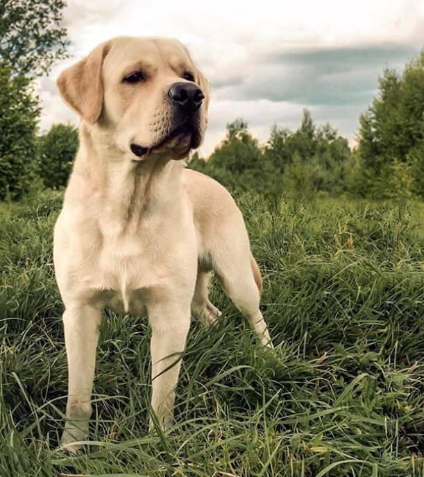120 Jewish Dog Names | The Paws