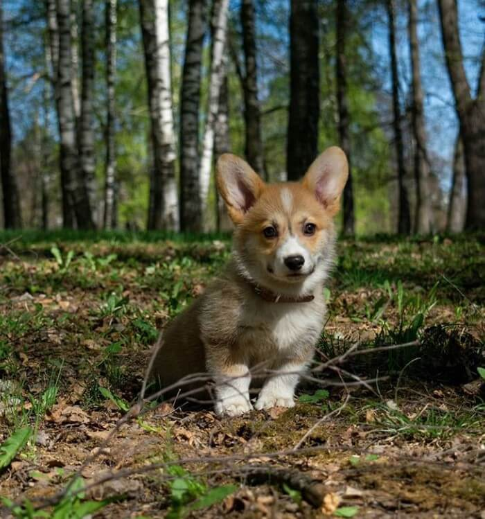 Male Dog Names - 30 Best Dog Names and Meanings - The Paws