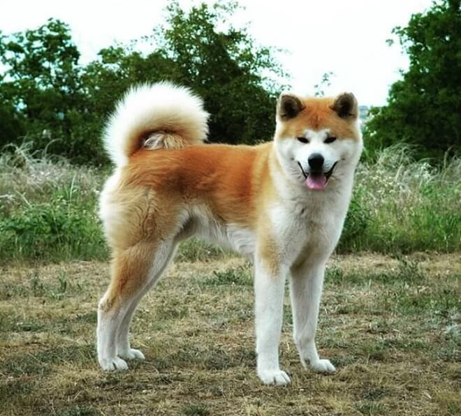 200+ Female Japanese Dog Names with Meanings   dogmale - Part 2