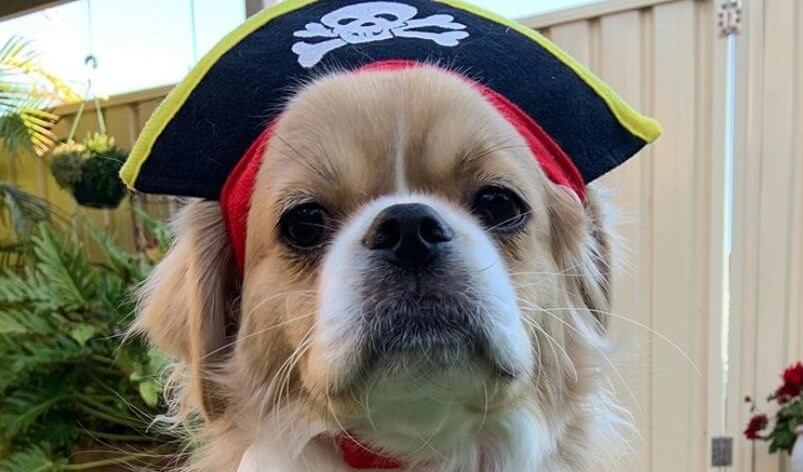 Pirate Dog Names - Over 50 Inspiring Ideas | The Paws