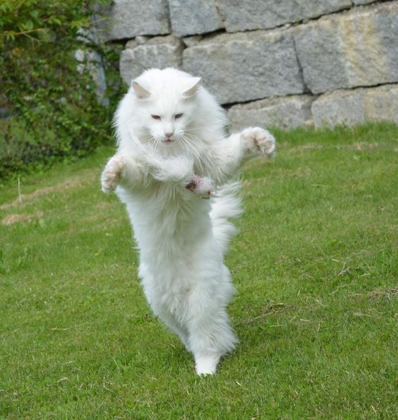 14 Facts You Didn't Know About Maine Coon Cats – The Paws