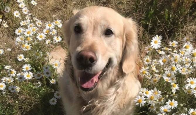 Top 70+ Flower Names for Your Dog | The Paws